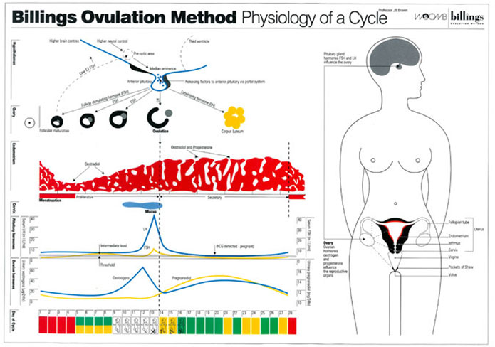 Physiology-of-Cycle